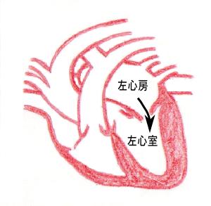 左心房→左心室